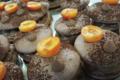 macarons chocolat Guanaja et abricots