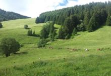Les bergers de Comborse