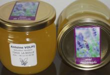 Antoine Volpy, miel de lavande