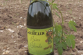 Micro brasserie Le Goubelin, bière blonde