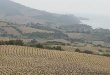 Domaine Cardoner Les Tines