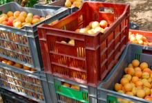 Serre Romani, abricots