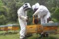 Au rucher de flora