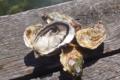"""Huitres rouzières, L'huître Fine """"La Centurion"""" bio"""