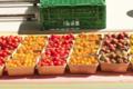 Les petits fruits de Jef, tomates cerise