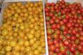 Le domaine des arbres blancs, tomate cerise
