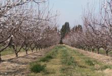 Le domaine des arbres blancs