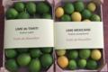 Pépinière Vessières, lime mexicaine