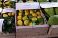 Pépinière Vessières, citron meyer