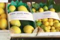 Pépinière Vessières, citron zagara bianca