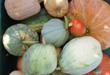 Panier légumes - Permaculture