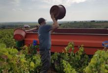 Vignerons du Terrassous