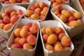 La Palette bio, abricots