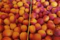 Mas dels Miquels, abricots