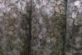 L'escargot du Faurou, Escargots petit gris (surgelés)
