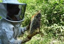 L'abeille enchantée