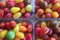 EARL du Mas Ay, tomates cerise