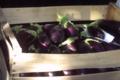 Les Jardins De La Cabane, aubergines