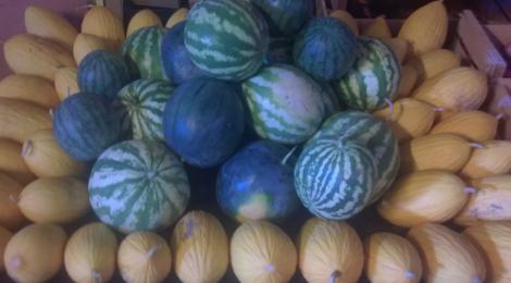 O'BIO 2 Villedaigne, melon canari