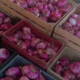 O'BIO 2 Villedaigne, oignons rouges