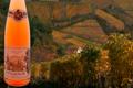Vins Fins D'alsace Justin Boxler, Pinot Noir rosé