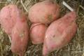 Hervé Viola, patate douce