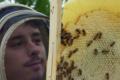 Les ruchers de l'Alaric