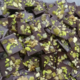 Chocolaterie Védasienne. Mendiants