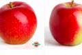 Rothgerber – ferme fruitière. Mairac la flamboyante
