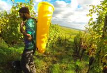 Domaine Geschickt - Vins d'Alsace