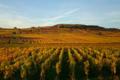 Vins d'Alsace Domaine Horcher