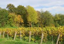 Champagne Michel Hoerter