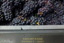 Champagne Sourdet Diot