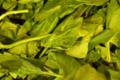 Légumes et saveurs. Epinard