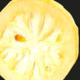 Confiserie Saint Sylvestre. citron en rondelles