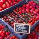 Le Potager du Nebbio. Tomate cerise