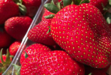Grandi Fruits et légumes