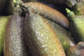Grandi Fruits et légumes. Citron caviar