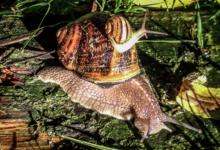Escargots de la Broche