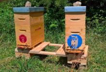 Le chemin des abeilles