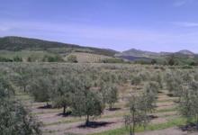 Huile d'Olive Flori