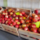 La ferme du Colombier. Pommes