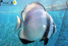 Tahiti Fish Aquaculture
