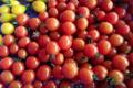 Clos masure du p'tit caux. tomates cerises