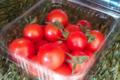 Le jardin de Germain. tomate cerise