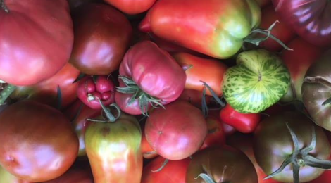 La Ferme Valdieu. tomates
