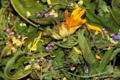 Les herbes vagabondes. Equinox-Détox