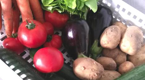 La ferme du major. Petit panier de légumes bio