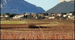 Languedoc Pic-Saint-Loup rouge et rosé, Coteaux du Languedoc Picpoul de Pinet
