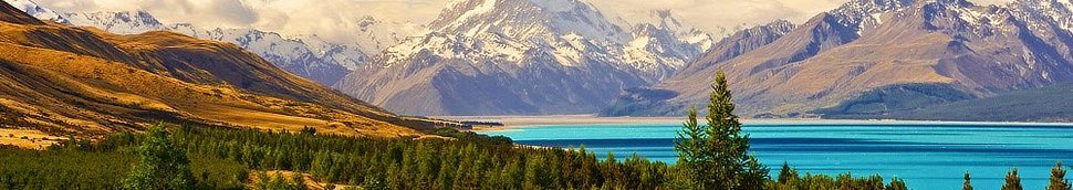 Spécialités Gastronomiques de Nouvelle-Zélande